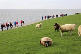 Tussen Slik en Zand 2017: Boottijden Wagenborg Passagiersdiensten BV